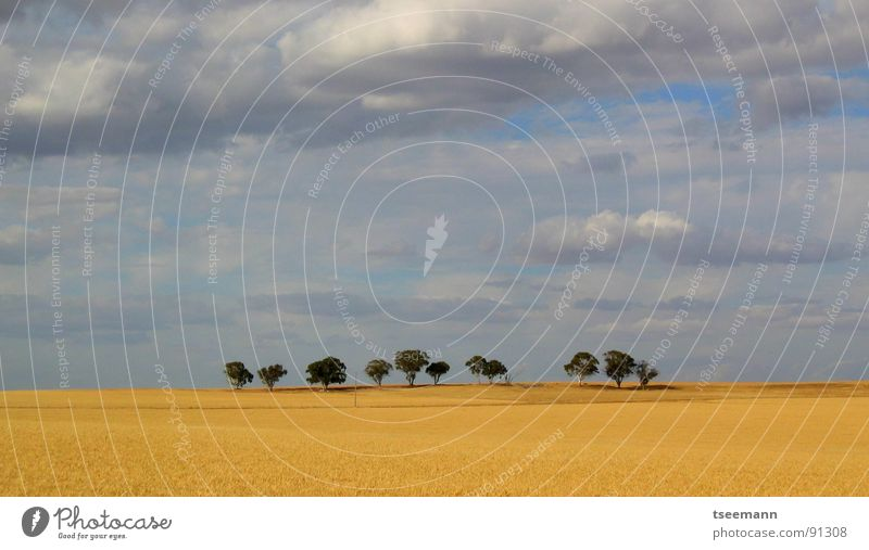 Lonely trees Australia Wheat Field Tree Clouds Sky Yellow Bad weather Loneliness Far-off places Countries West cloud Blue cloudy lonely rolling country Americas