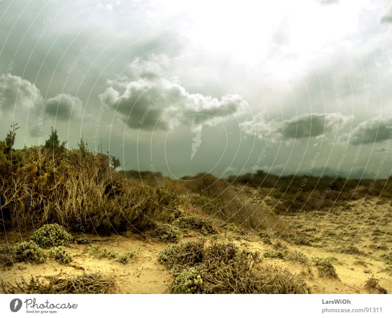 wasteland Dreary Gloomy Bushes Clouds Earth colour Underwater photo Beach Sand Landscape Sky Sun Far-off places Desert Root