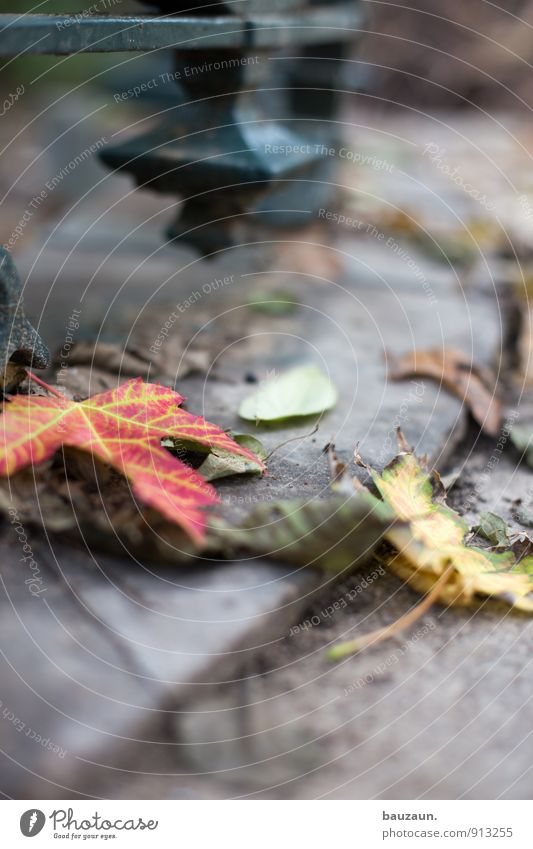 on the ground. Trip Garden Thanksgiving Nature Landscape Plant Earth Autumn Tree Leaf Park Street Lanes & trails Metal To fall To dry up Grief Death