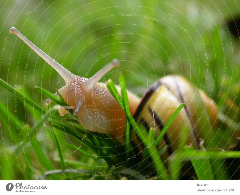 delicious! Snail shell Mucus Slimy Crawl Slowly Animal Feeler To feed Grass Slow motion Smoothness move Eyes Looking Emotions slime antenna slow