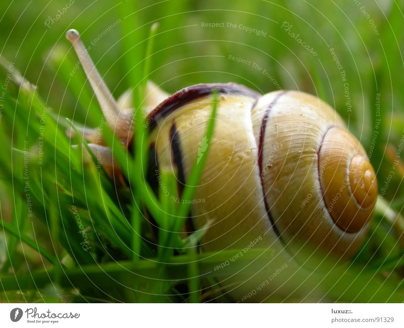 Crawl away Snail shell Mucus Slimy Slowly Animal Feeler To feed Grass Slow motion Smoothness Detail Hide creep away move Eyes Looking Emotions slime antenna