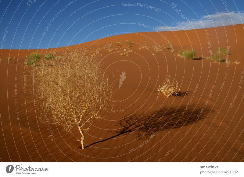 Sand Bushes Desert Thin Trust Hot Dry Beach dune Africa Namibia Fighter Namib desert Sossusvlei Desert plant
