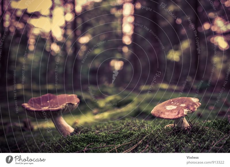 in twos ... Nature Landscape Moss Forest Soft Green Mushroom Mushroom cap Amanita mushroom Woodground Close-up Blur Shallow depth of field Worm's-eye view