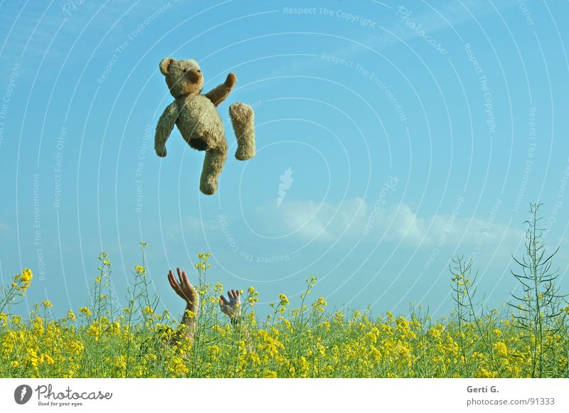 teddy-tossing Throw in the air Jump Teddy bear Toys Hand Canola Canola field Multicoloured Yellow Brown Clouds Summer's day Phantom pain Handicapped Joy