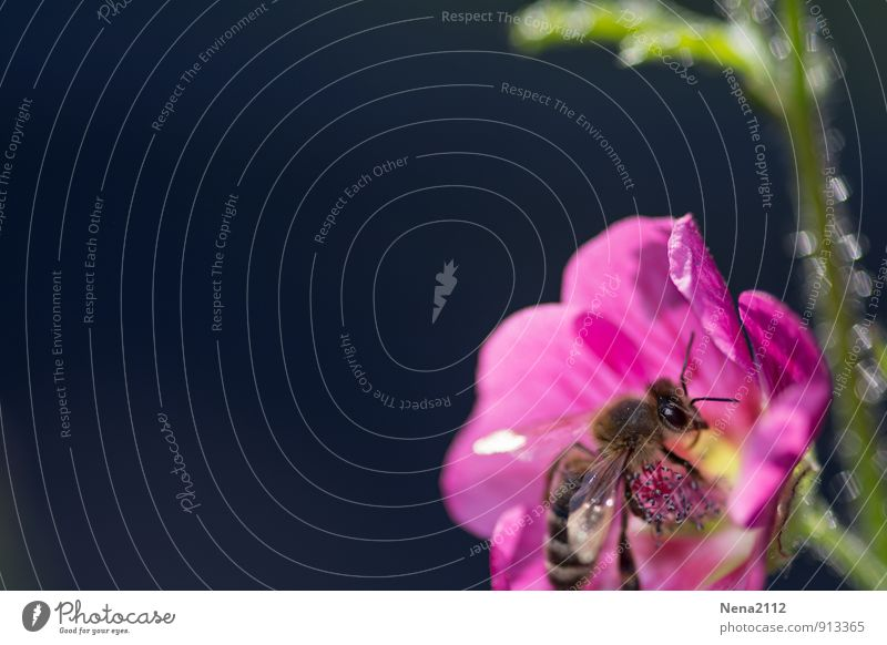 Nature Plant Summer Flower Animal Environment Meadow Blossom Spring Eating Garden Pink Park Fly Sit Beautiful weather
