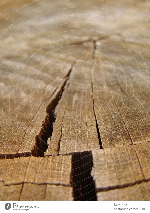 fissure Wood Oak tree Crevice Earthquake Plant Growth Chainsaw Tree Summer Column Wood grain Structures and shapes radial Old Life Haircut walt
