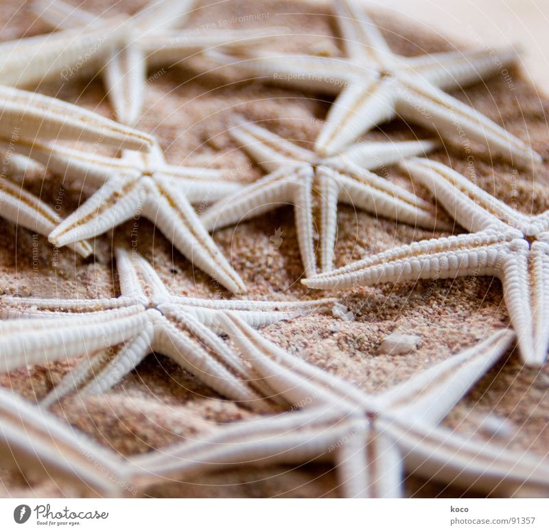 Ocean Beach Animal Stone Sand Coast Fish Star (Symbol) Find Starfish