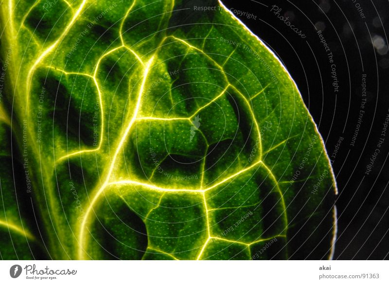 Nature Green Plant Leaf Environment Bushes Virgin forest Botany South America Wilderness Long exposure Verdant Creeper Part of the plant Cuckoo pint