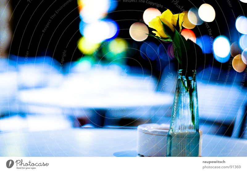 Flower of the night Night Moody Light Cold Gastronomy Lamp Colour Nature and city