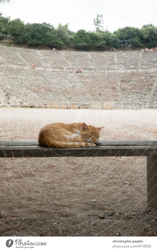Beastly left by the whole theatre Architecture Epydaurus Greece Manmade structures Tourist Attraction Landmark Animal Pet Cat 1 Relaxation Sleep Historic Cute