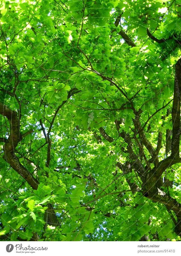 green sky Tree Green Leaf Summer Spring Large Well-being Happy Photosynthesis Growth Park Forest Branch Blossoming Colour Tree trunk Life