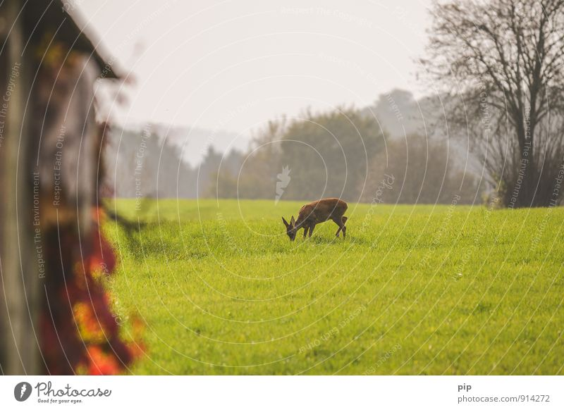 renaturation Environment Nature Landscape Grass Meadow Field Forest Animal Wild animal Roe deer 1 Eating Safety (feeling of) Red deer To feed Horizon Timidity