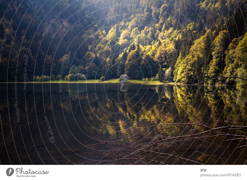 lake Nature Landscape Summer Weather Beautiful weather Forest Mountain Lakeside Exceptional Dark Vacation & Travel Black Forest Autumnal Calm Beam of light