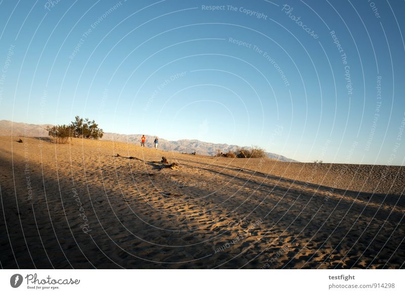 sand Environment Nature Landscape Plant Cloudless sky Desert Death valley Nationalpark Environmental protection Dust Dune Desert plant Warmth Hot Colour photo