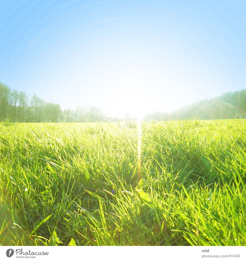 Wiese-3x-exposed Meadow Summer Back-light Spring Green Square Loneliness Light Lawn Blue Sun Beam of light