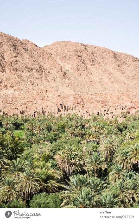 Oasis Nature Landscape Sand Cloudless sky Beautiful weather Tree Morocco Tourism Vacation & Travel Palm tree Desert Mountain kasbah Warmth Near and Middle East