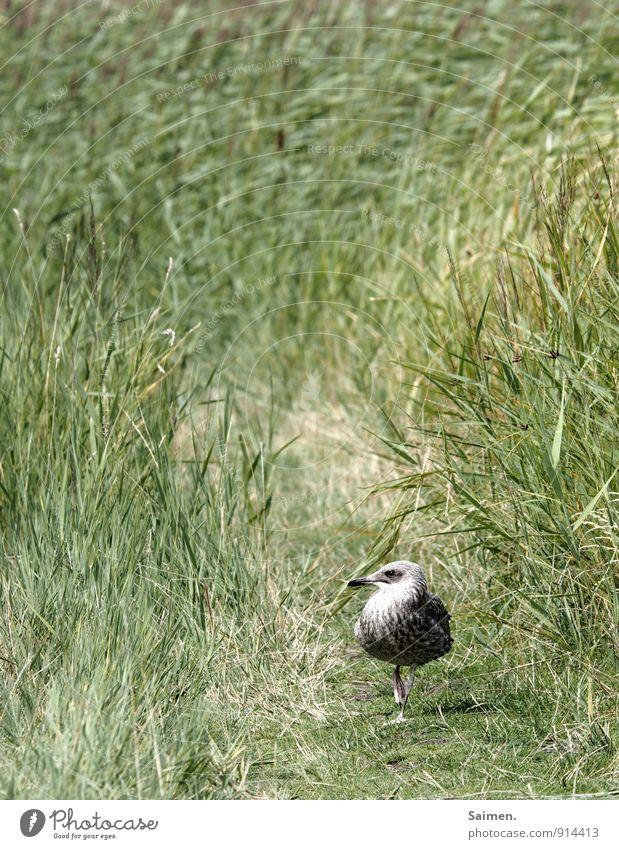 Nature Plant Green Landscape Animal Environment Movement Meadow Grass Lanes & trails Bird Wild animal Walking Animal face Beak