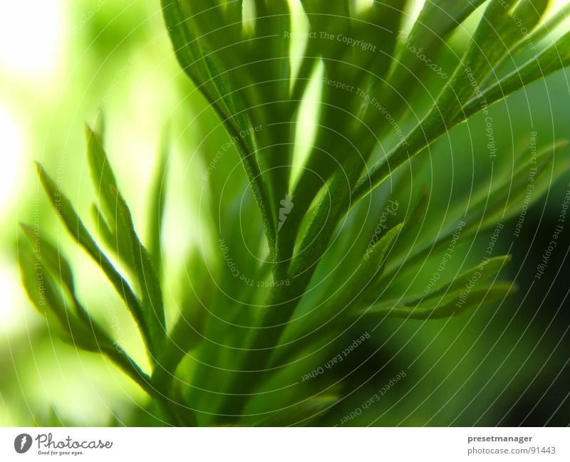 green moment Plant Green Blur Esthetic Stalk Celestial bodies and the universe bright Nature Structures and shapes leave Sun structure Deep depth blur Snapshot
