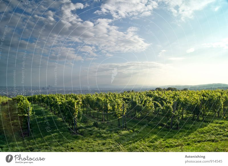 Vineyard before Vienna Environment Nature Landscape Plant Air Sky Clouds Sun Sunrise Sunset Sunlight Autumn Weather Beautiful weather Grass Bushes