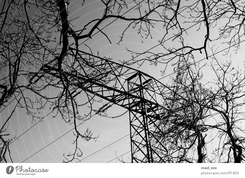opposites... Playing Electricity pylon Simple Black & white photo Grief Distress Branch Cable straightforward Sky Beautiful weather