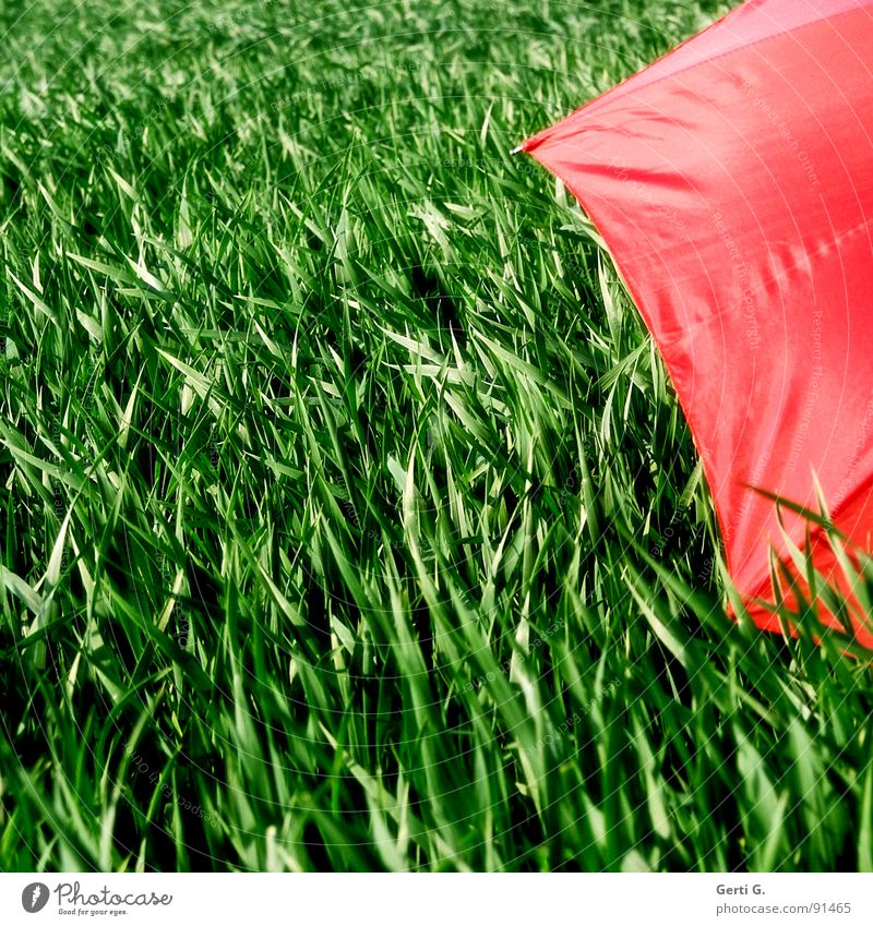 Green Red Summer Colour Movement Wind Field Leisure and hobbies Fresh Protection Agriculture Umbrella Hide Grain Sunshade Blade of grass