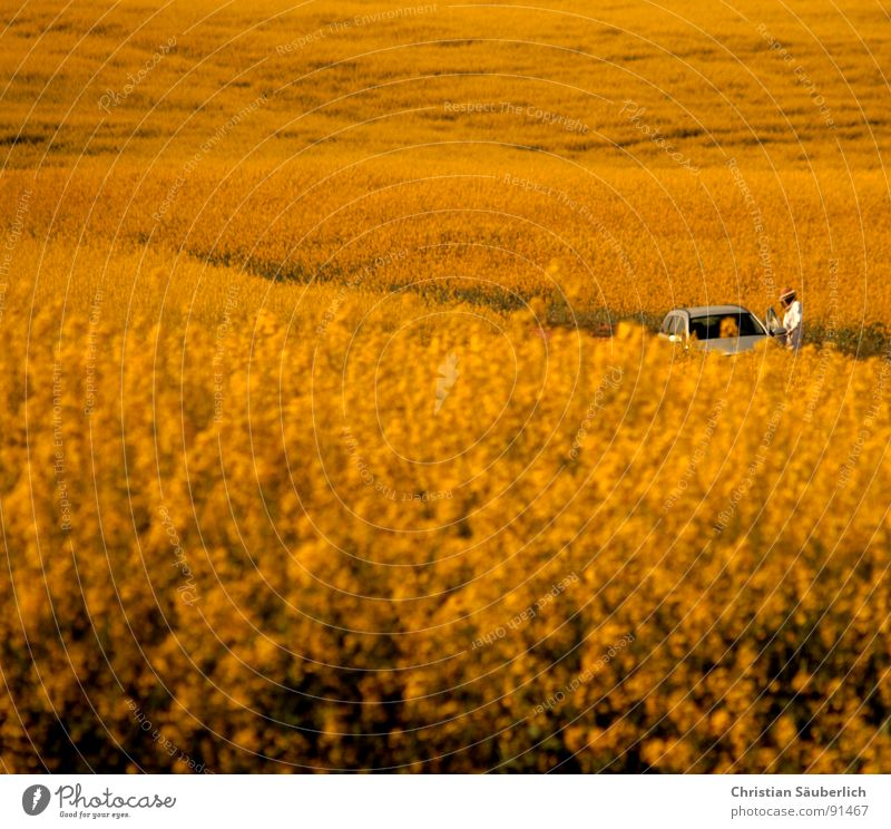 Man Plant Loneliness Yellow Far-off places Blossom Spring Car Field Gloomy Desert Pasture Canola Method Oilseed rape oil