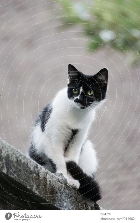 Watching from above Summer Tree Leaf Garden Ghent Town House (Residential Structure) Wall (barrier) Wall (building) Backyard Animal Pet Cat 1 Stone wall Brick