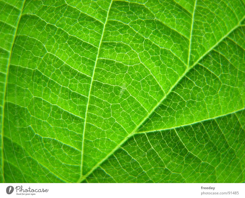 ::: Chlorophyll ::: Background picture Tree Romance Multicoloured Near Photosynthesis Mature Green Leaf Deities Plant Bright green Vessel Lower Saxony
