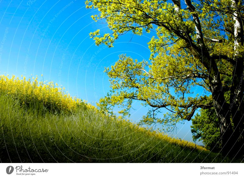 Sky Nature Blue Vacation & Travel Green Plant Sun Flower Far-off places Landscape Yellow Meadow Cold Spring Freedom Blossom
