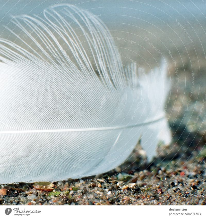 Bird Flying Feather Wing Delicate Easy Fragile Swan