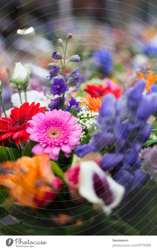 more flowers. Shopping Style Joy Happy Well-being Contentment Senses Fragrance Feasts & Celebrations Valentine's Day Mother's Day Plant Flower Blossom Town