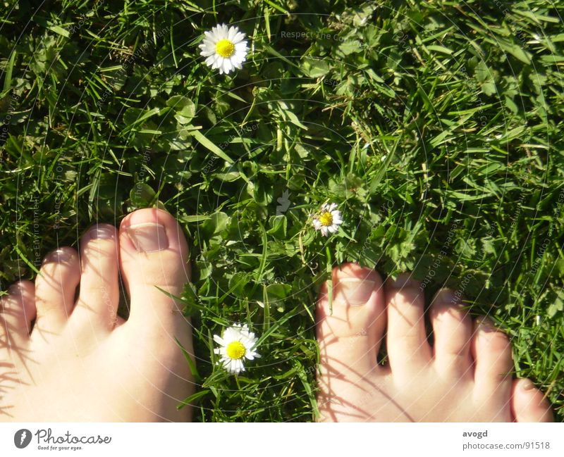 The fat uncles Toenail Nail Barefoot Daisy Summer Spring Green White Yellow Toes Grass Flower Blossom Skin color Feet Lawn Sun Floor covering Shadow