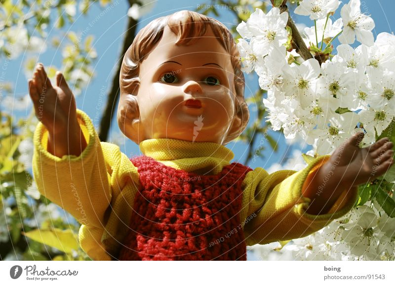 Blossom Spring Near Peace Dress Trust Toys Doll Safety (feeling of) Intimacy Cherry Embrace Pollen Pushing Stamen Cherry blossom