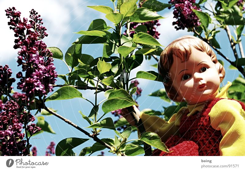 When the lilac lilac blooms again, Movie with a regional setting Lilac Doll Blossom Stamen Pollen Spring fever Dolly doctor Dress Green pastures Wave Toys