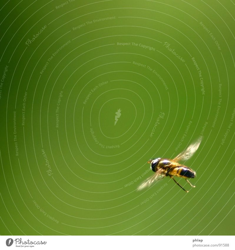 ...floating in the corner Hover fly Insect Green Spring Summer Garden Park Macro (Extreme close-up) Close-up Fly Flying Nature Wing Legs