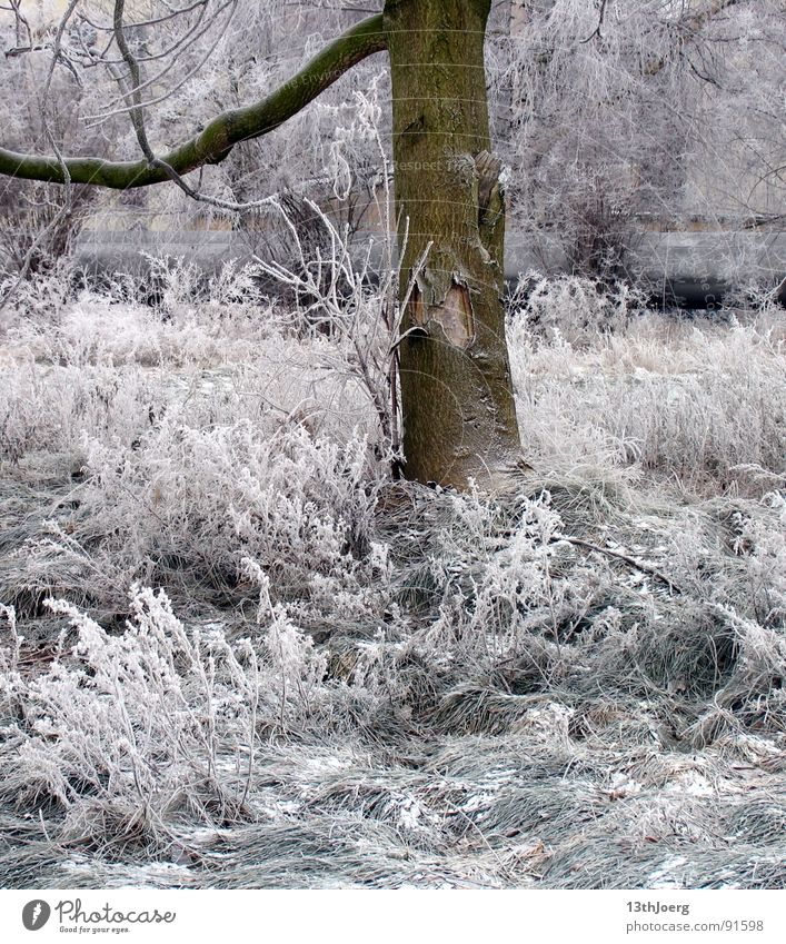 Nature White Tree Winter Meadow Cold Snow Garden Park Ice Frost Leipzig Freeze Train station Tree bark Shut down