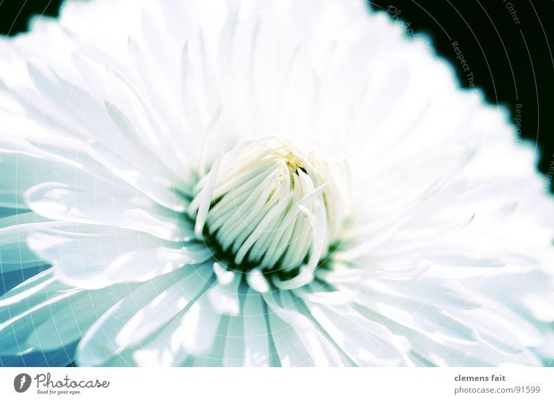 Beautiful White Flower Blue Summer Cold Park Fresh Clean Pure