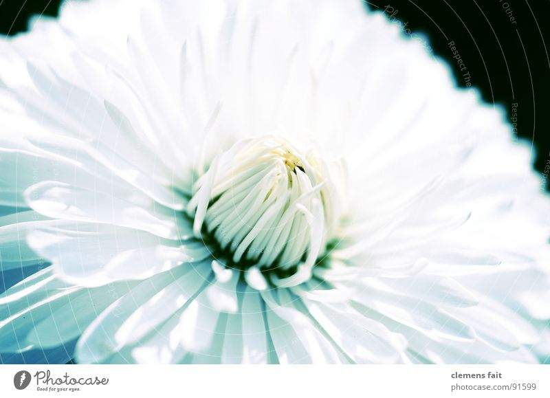 Beautiful White Flower Blue Summer Cold Park Fresh Clean Pure