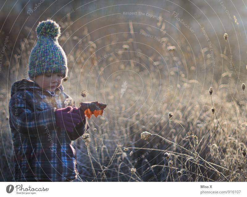Human being Child Nature Flower Leaf Winter Cold Environment Autumn Emotions Meadow Grass Snow Boy (child) Playing Moody