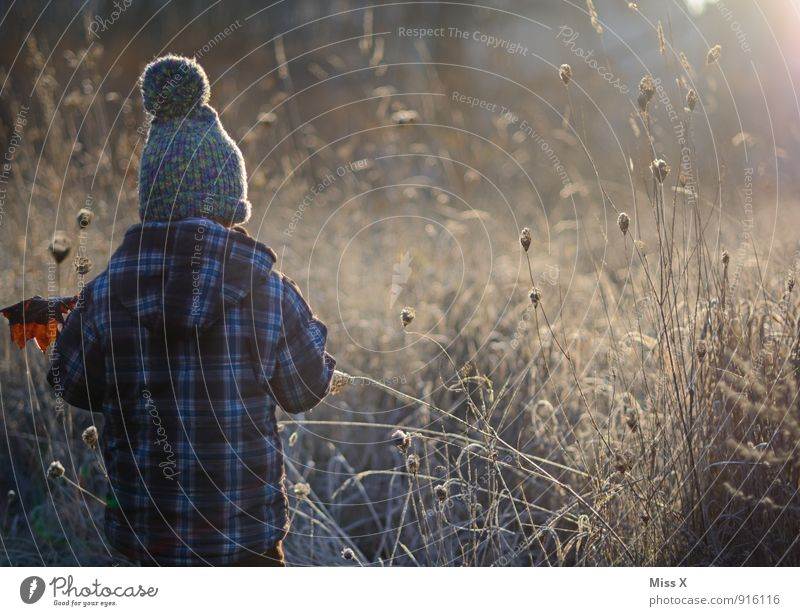 The morning Human being Child Toddler Boy (child) 1 1 - 3 years 3 - 8 years Infancy Autumn Winter Fog Ice Frost Bushes Leaf Field Cap Cold Emotions Moody