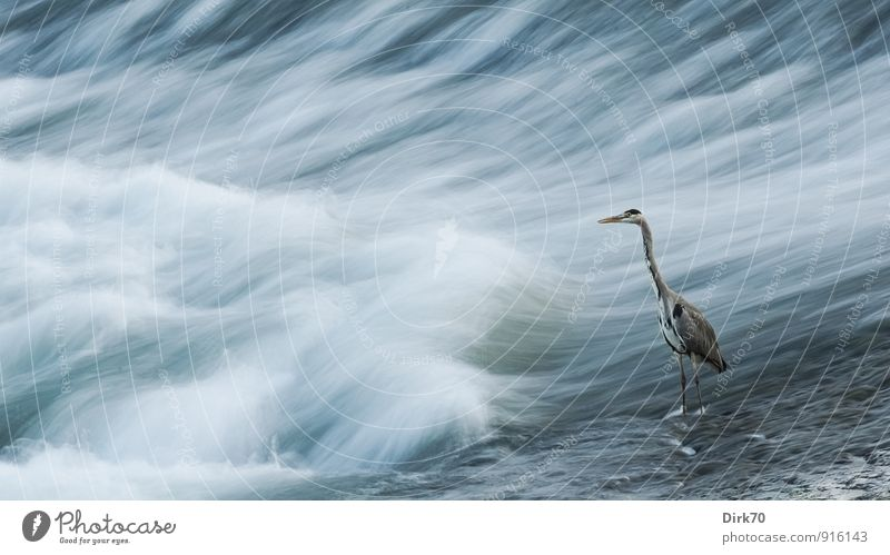 Blue White Water Loneliness Animal Black Cold Yellow Movement Coast Gray Time Bird Waves Wait Observe