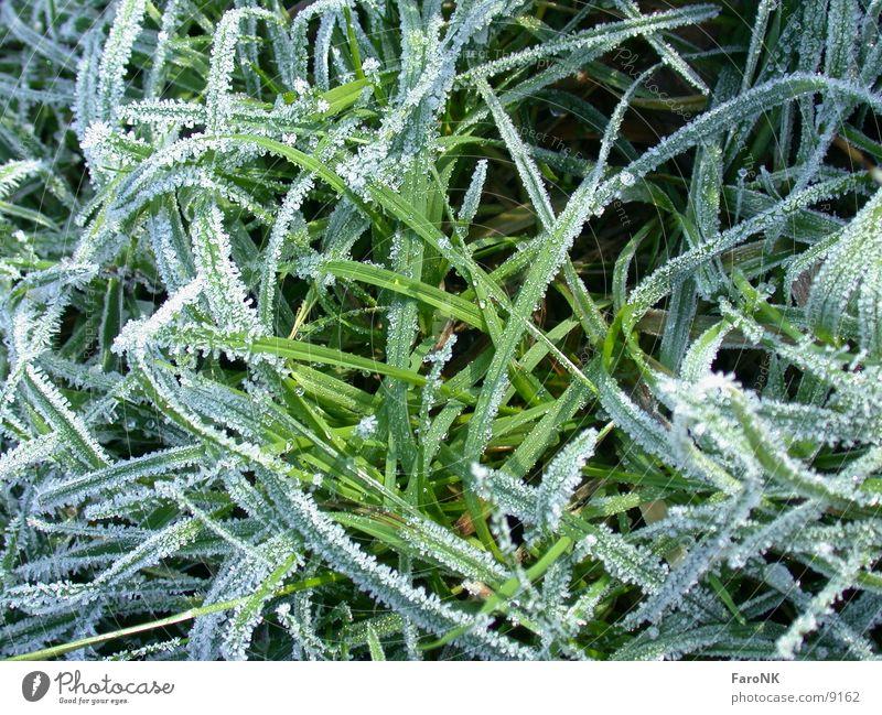 Green Grass Frost