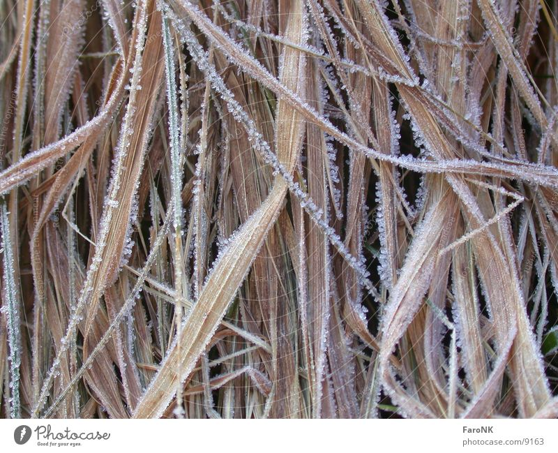 Grasses 2 Brown Frost Ice