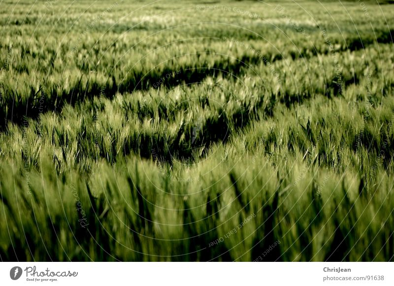 Nature Green Spring Moody Lighting Field Wind Tracks Agriculture Blade of grass Grain Dusk Blow Tractor Barley