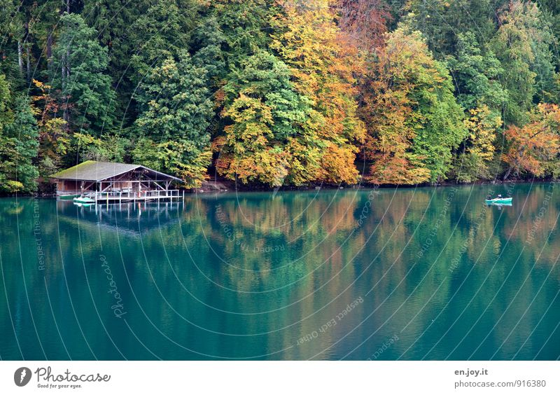 dream autumn Vacation & Travel Tourism Trip 3 Human being Nature Landscape Autumn Automn wood Forest Lake alpine lake Rowboat Pedalo Kitsch Yellow Green