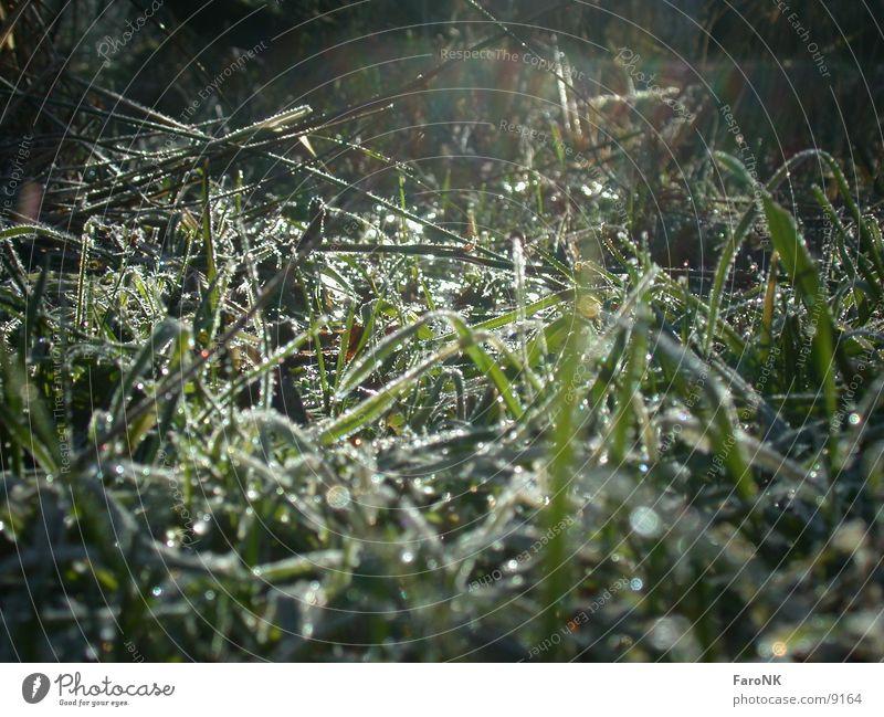 Sun Green Meadow Grass