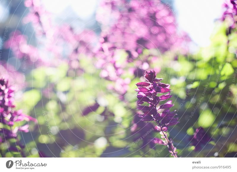 Plant Green Summer Flower Blossom Spring Garden Park Bushes Beautiful weather Blossoming Violet Spring fever Spring flower Spring day