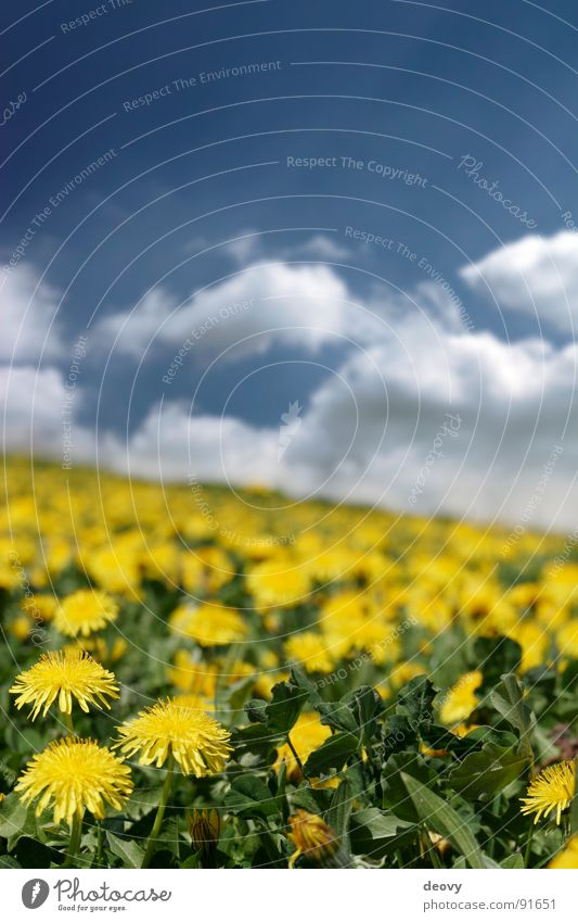 Sky Sun Flower Green Blue Plant Summer Vacation & Travel Clouds Yellow Meadow Blossom Field Trip Fresh