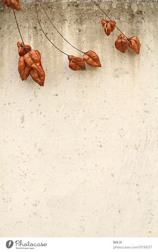 Nature Plant Wall (building) Autumn Wall (barrier) Relationship Autumnal colours Early fall
