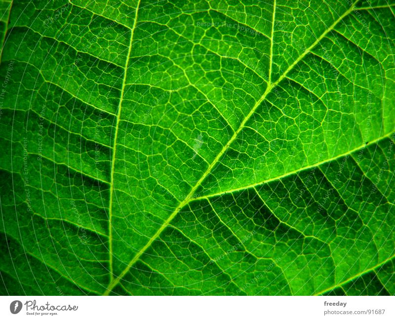 Nature Plant Green Tree Leaf Environment Life Emotions Background picture Power Bushes Crazy Closed Corner Branch Force